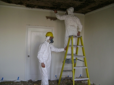 Mold-Out Mold Remediation Services